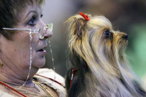Algumas empresas permitem que o dono leve animais pequenos no colo, desde que seja feita a reserva. Getty Images
