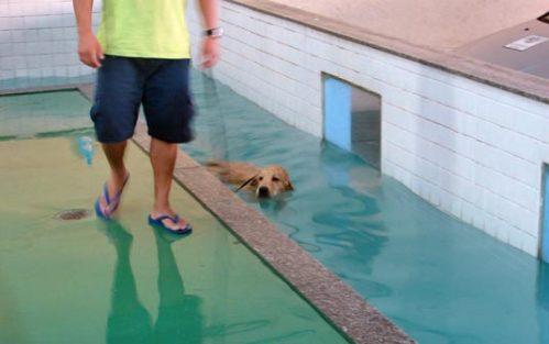 Cão nada em piscina de pet shop na Zona Sul (Foto: Luciana Bonadio/G1)