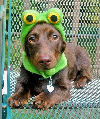 Frog or Dog